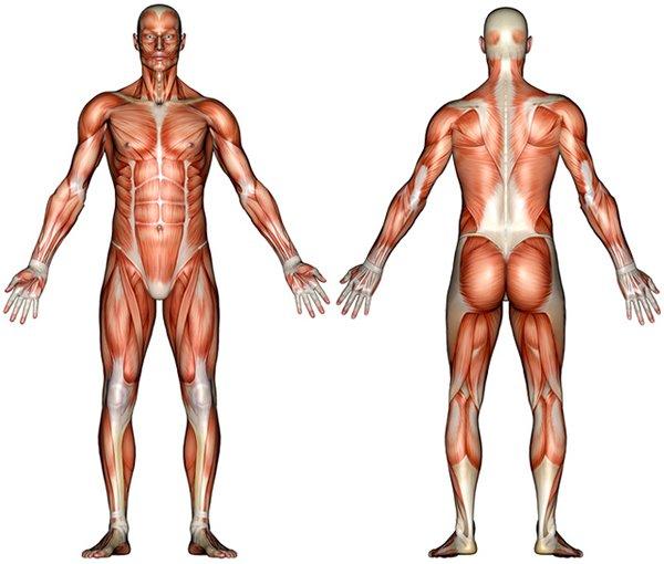 کوفتگی عضلات