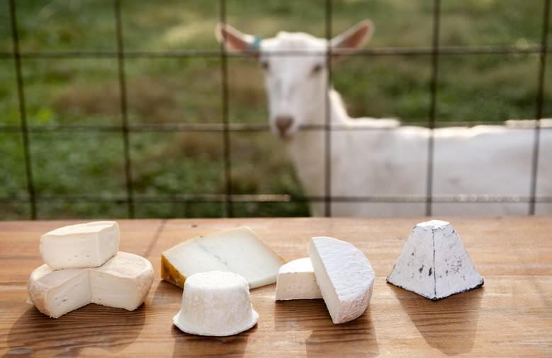 پنیر شیر بز