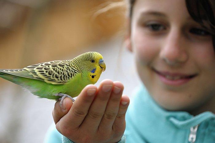 حیوانات خانگی و کرونا ویروس