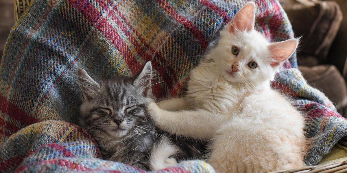آیا حیوانات خانگی به کرونا مبتلا میشوند؟